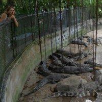 Крокодилы :: ирина гунгор