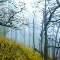 Туман :: Алексей Сазонов