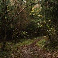 в октябрьском лесу :: sergej-smv