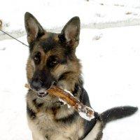 Собака :: Екатерина Гилёва