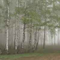 Сказка в тумане... :: Olenka
