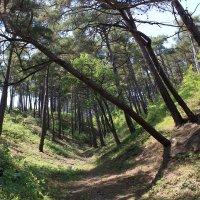 горный лес :: Геннадий Свистов