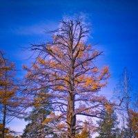 было дерево... :: Михаил Колодкин