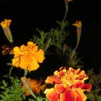 цветы :: дмитрий панченко