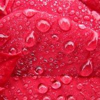 Текстуры дождя :: Дмитрий .