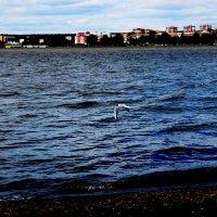 Чайка над водой :: Евгений Горелов