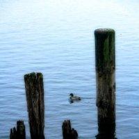 Утро на озере :: Геннадий Коробков