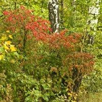 Осень в лесу. :: Mariya Trofimova