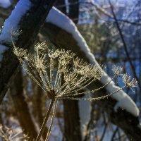 Мороз и солнце... :: Денис Антонов