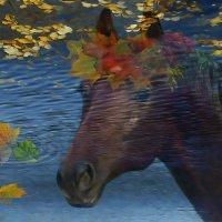 Отражение лошади в пруду :: Светлана Шестова
