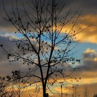 Осенний закат :: Светлана З