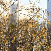 Золотая осень :: Petrovich