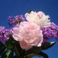 Небо в цветах :: Mariya laimite