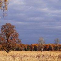 Панорама осени. :: Антонина Гугаева