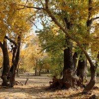 Золотая осень :: Dr. Olver