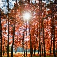 Осеннее солнце :: Андрей Арсентьев