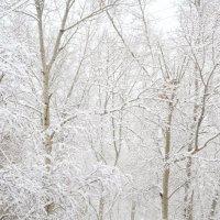 Зима :: Виталий Иванов