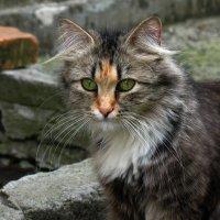 взгляд хищника :: Аня Петренко