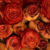 Банальности...розы :: Martes Kendo