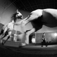 Цирковое закулисье :: Maxim Bukin - www.MaxPhoto.info