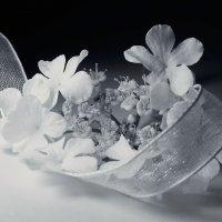 Когда цветет калина :: Алёна Дягелева