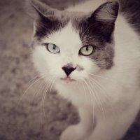 Дворовый кот :: Марина Машкова