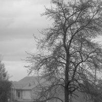 дым памяти :: Елена Маскалева