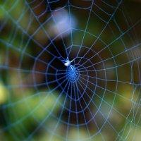 паутина с пауком:) :: Nastya Ishimova