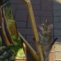 Котик и картины :: Светлана Овчинникова