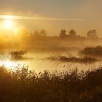Золотой восход :: Eugene Remizov