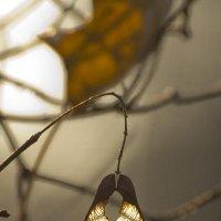 Осень :: Alex Leus
