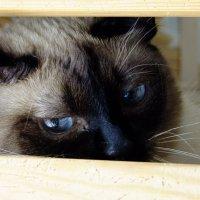Кошки тоже умеют грустить :: Tanya Bogdanova