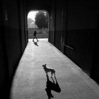 Утренняя прогулка. 2012 :: Maxim Bukin - www.MaxPhoto.info
