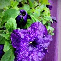after rain :: Arina Kekshoeva