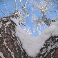 """Дерево под условным названием: """"штаны"""" :: Любовь Шихова"""