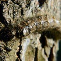 Insect :: Руслан Хайдаров