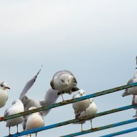 Злая чайка :: Avrr Isaeff