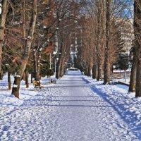 Зимний парк :: Михаил Фотолюбитель