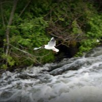 seagull :: Arina Kekshoeva