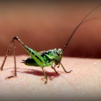 grasshopper :: Arina Kekshoeva