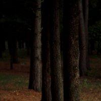 лес :: Маргарита Кирюшина