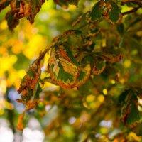 Осень :: Serj Serj