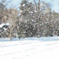 царь снега :: Татьяна Садчикова