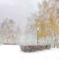 Краски зимы :: Владимир Новиков