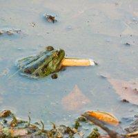 курящая лягушка :: Александра Полякова-Костова
