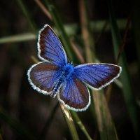 бабочка :: Evgeniy Evteev
