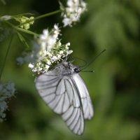 Бабочка и цветок :: Роман Яшкин
