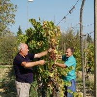 урожай :: Korto Maltez