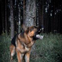 Псевдозлобный пес :: Антон Лебедев