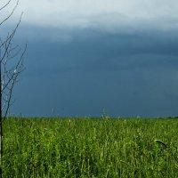 tree storm :: Татьяна Степанова